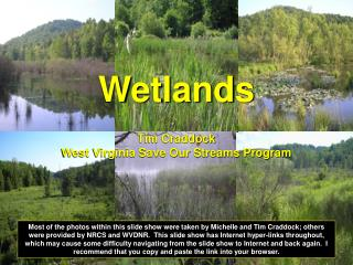 Wetlands Tim Craddock West Virginia Save Our Streams Program