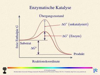Enzymatische Katalyse