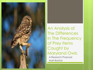 An Analysis of The Differences  I n The Frequency of Prey Items Caught by Maryland Owls
