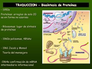 TRADUCCION - Biosíntesis de Proteínas
