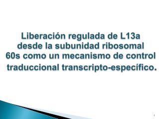 Liberación regulada de L13a  desde la subunidad ribosomal  60s como un mecanismo de control