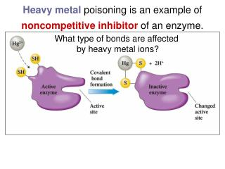 Heavy metal  poisoning is an example of  noncompetitive inhibitor  of an enzyme.
