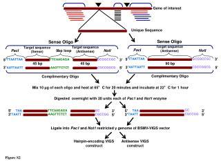 Gene of interest