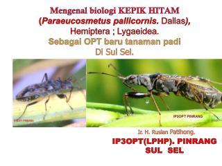 Mengenal biologi  KEPIK HITAM ( Paraeucosmetus pallicornis .  Dallas ),  Hemiptera  ;  Lygaeidea .