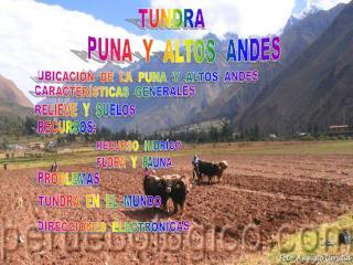PUNA  Y  ALTOS  ANDES