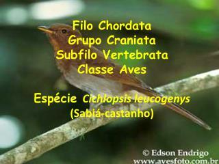 ALIMENTAÇÃO Dieta variada – vantagem do vôo; Carnívoras, néctar; Onívoras  conhecidas como: