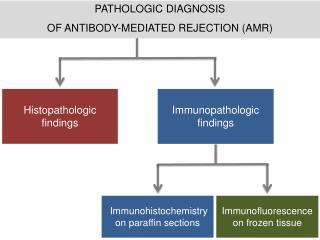 PATHOLOGIC DIAGNOSIS OF ANTIBODY-MEDIATED REJECTION (AMR)
