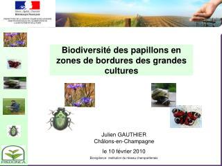 Biodiversité des papillons en zones de bordures des grandes cultures