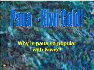 Why is paua so popular with Kiwis?