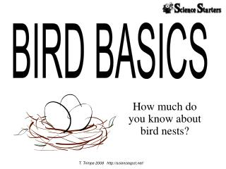How much do  you know about  bird nests