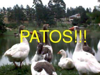 PATOS!!!