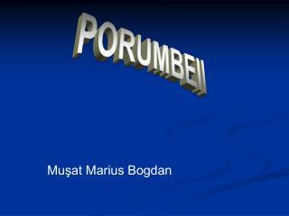Muşat Marius Bogdan