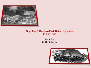 Stop, Thief! There's a Pack Rat on the Loose by Burt Heim Pack Rat by Byrd Baylor