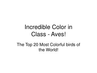 Incredible Color in  Class - Aves!