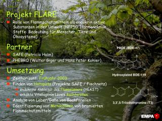 Projekt FLARE