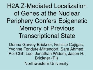 Background – localization of chromatin at the nuclear periphery