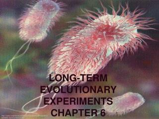 LONG-TERM EVOLUTIONARY EXPERIMENTS CHAPTER 6