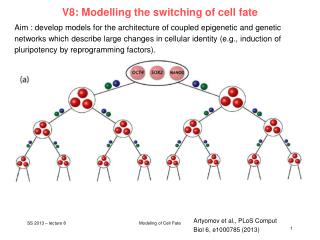 V8: Modelling the switching of cell fate