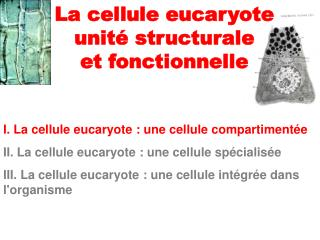 I. La cellule eucaryote : une cellule compartiment�e