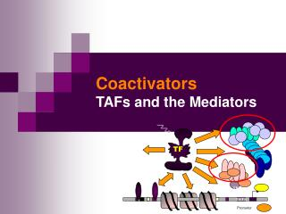 Coactivators TAFs and the Mediators