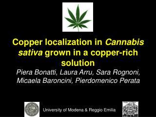 Copper localization in  Cannabis sativa  grown in a copper-rich solution