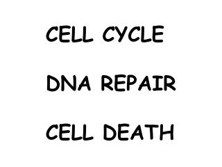 CELL CYCLE DNA REPAIR CELL DEATH