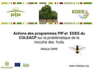 Actions des programmes PIP et  EDES du COLEACP  sur la problématique de la mouche des  fruits