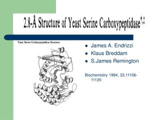James A. Endrizzi Klaus Breddam S.James Remington Biochemistry 1994, 33,11106-11120