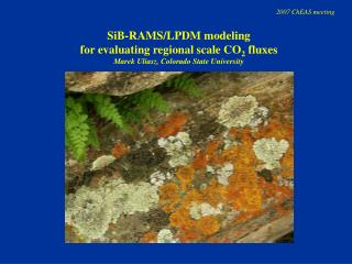 SiB-RAMS/LPDM modeling  for evaluating regional scale CO 2  fluxes