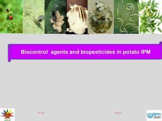 Biocontrol  agents and biopesticides in potato IPM