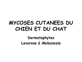 MYCOSES CUTANEES DU CHIEN ET DU CHAT
