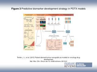 Figure 3 Predictive biomarker development strategy in PDTX models