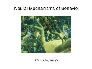 Neural Mechanisms of Behavior