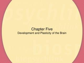 Chapter Five Development and Plasticity of the Brain