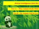 Animal Intelligence Unit Six
