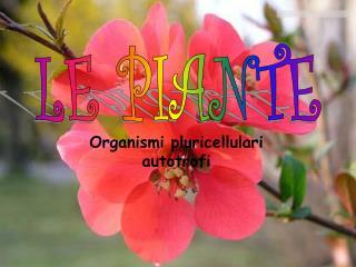 Organismi pluricellulari autotrofi