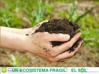 UN ECOSISTEMA FR�GIL:   EL S�L