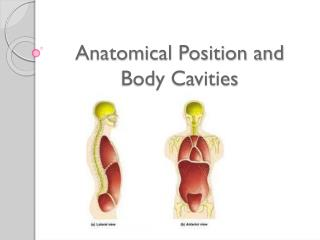 Anatomical Position and Body Cavities