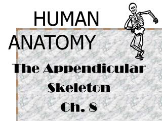 The Appendicular Skeleton Ch. 8