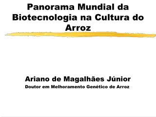 Panorama Mundial da Biotecnologia na Cultura do Arroz