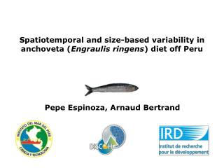 Spatiotemporal and size-based variability in anchoveta ( Engraulis ringens ) diet off Peru