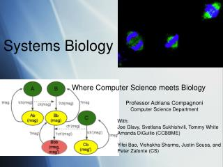 Where Computer Science meets Biology