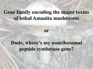 Genus  Amanita