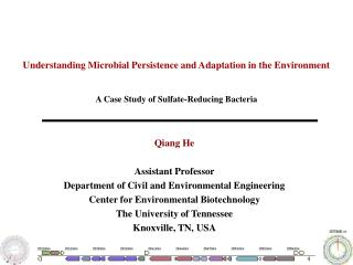 Understanding Microbial Persistence and Adaptation in the Environment
