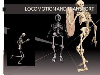 LOCOMOTION AND TRANSPORT
