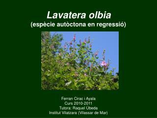 Lavatera olbia (espècie autòctona en regressió)