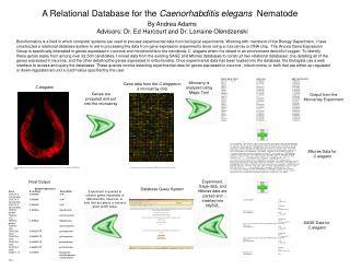 A Relational Database for the  Caenorhabditis elegans   Nematode