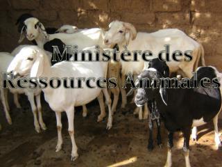 Ministère des Ressources Animales