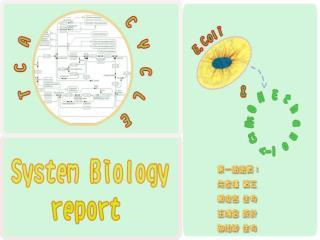 E.coli K-12 MG1655 pathway