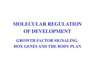 MOLECULAR REGULATION OF DEVELOPMENT  GROWTH FACTOR SIGNALING, HOX GENES AND THE BODY PLAN